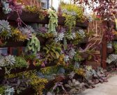 Giving your terrace style on holidays: create your own vertical garden